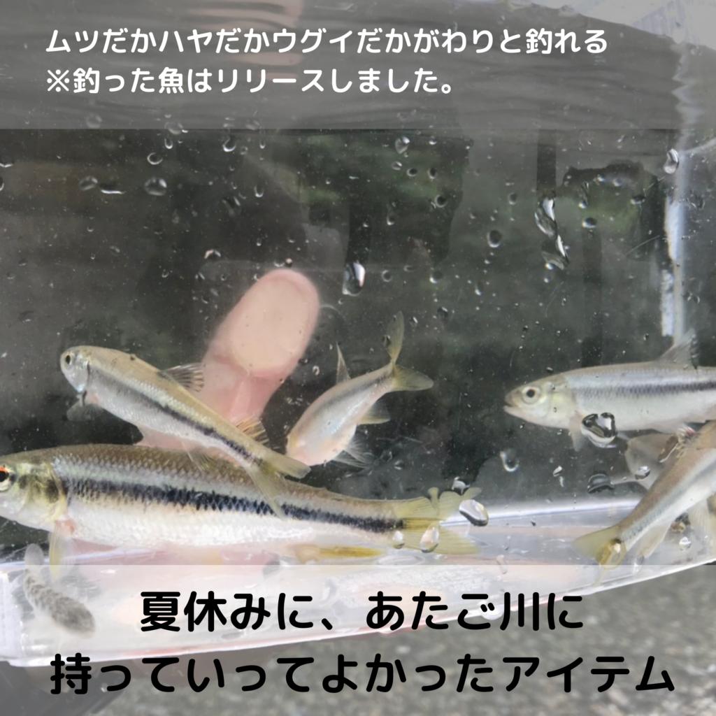 釣れた魚はキャッチ&リリース