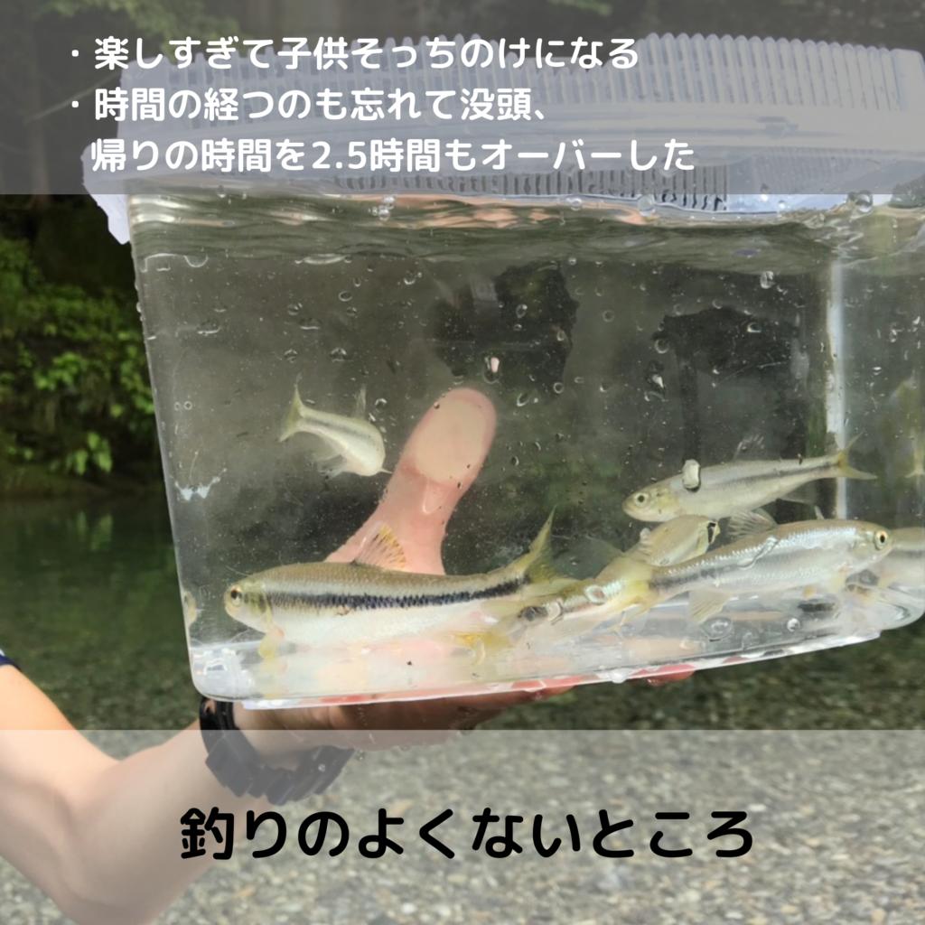 釣りの良くないところ